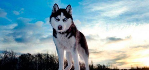 Клубы собаководов России с контактными данными