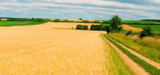 База предприятий, чья деятельность связана с сельским хозяйством 2017