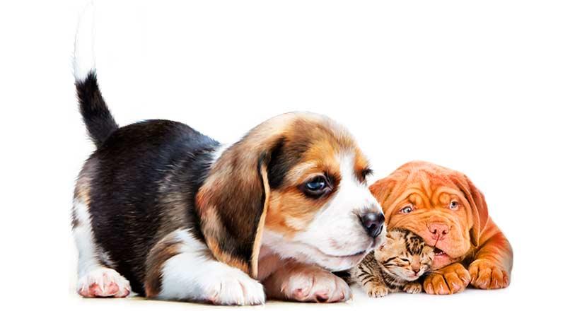 База организаций РФ - Товары для животных, Ветеринария.